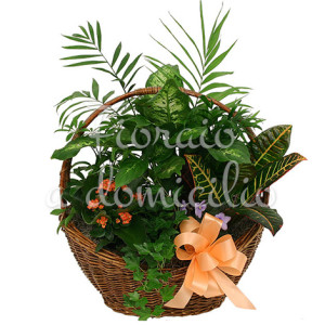 cesto-di-piante-miste-verdi