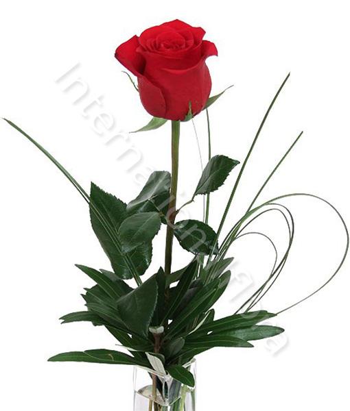 red_rose4.jpg